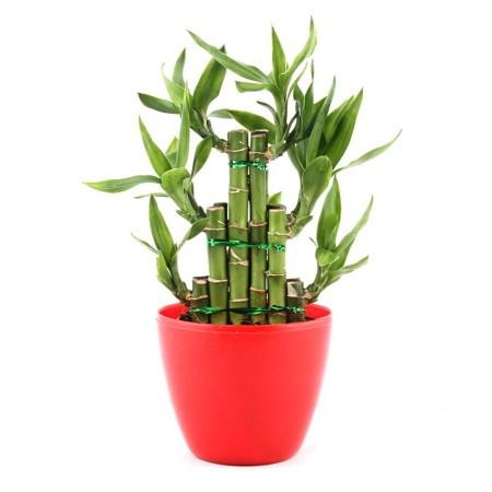 გაუღეთ კარი იღბალს: ეს მცენარე აუცილებლად უნდა იყოს თქვენს სახლში თუ თქვენ წარმატების მიღწევა გსურთ!