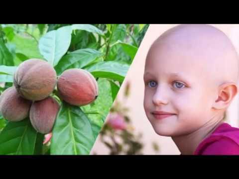 სრული სიმართლე: მცენარე, რომელიც სიმსივნეს 15 დღის განმავლობაში ამარცხებს, მკვლევარებმა განაცხადეს, რომ სიმსივნე სამუდამოდ ქრება!