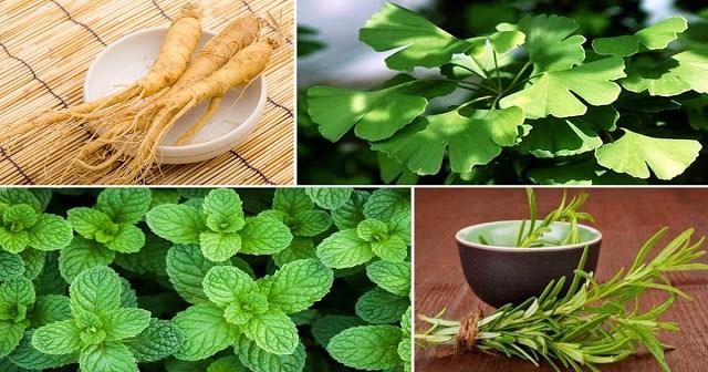 4 მცენარე, რომელიც იცავს ტვინს ალცჰეიმერის, დეპრესიის, შფოთვისა და სხვა მრავალი დაავადებისაგან!
